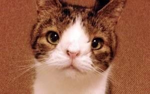 Η γάτα που δεν έχει... μύτη (pics)