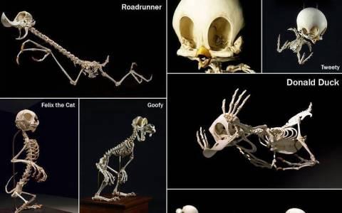 Πως είναι οι σκελετοί των διάσημων καρτούν;