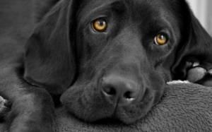 Ρόδος - Παραπέμφθηκαν σε δίκη για κακοποίηση ζώων