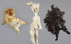 Ποιος είπε ότι οι σκύλοι δεν μπορούν να… πετάξουν;