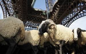 Βέλαξε ο... Πύργος του Άιφελ σε διαμαρτυρία κατά των λύκων!