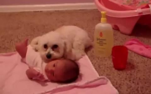 Σκύλος προστατεύει μωρό από... σκούπα! (video)