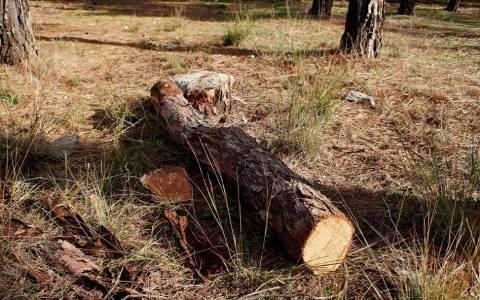 Κατασχέθηκαν 200 τόνοι παράνομης ξυλείας