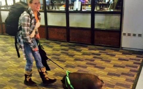 Την έδιωξαν από αεροπλάνο γιατί είχε ένα... γουρούνι (pics)