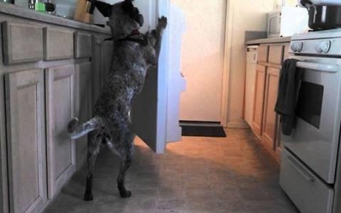 Ο σκύλος της χρονιάς: Φέρνει τη... μπύρα από το ψυγείο (vid)
