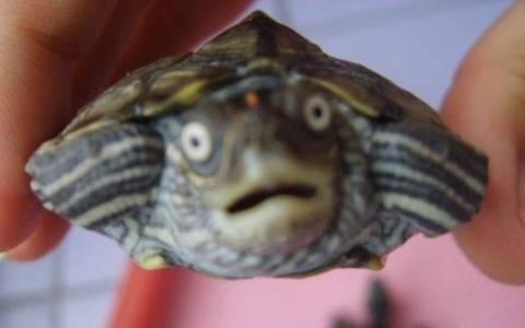 H χελώνα κι ο μπάρμαν!
