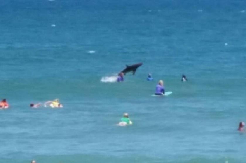Αυστραλία: Καρχαρίας βγήκε για… κυνήγι δίπλα σε σέρφερς!