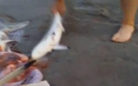 Νότια Αφρική: Ξεγέννησε καρχαρία με… καισαρική!