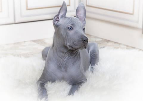 Οι πιο σπάνιες ράτσες σκύλων!
