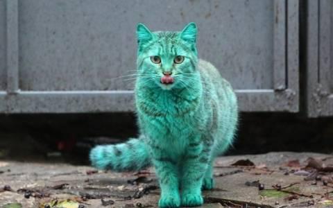 Βουλγαρία: Πέπλο μυστηρίου γύρω από μια πράσινη… γάτα!