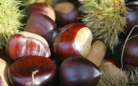 Χανιά: Νέες προοπτικές για την καλλιέργεια κάστανου