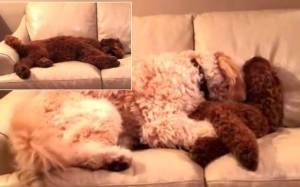 Σκύλος ηρεμεί το φίλο του μετά από εφιάλτη!