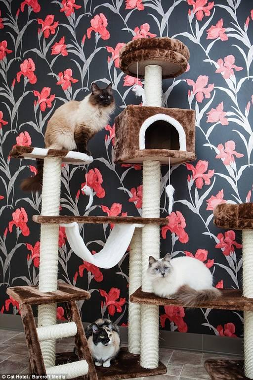 Ξενοδοχείο πολυτελείας για γάτες. Ζηλέψτε άφοβα!