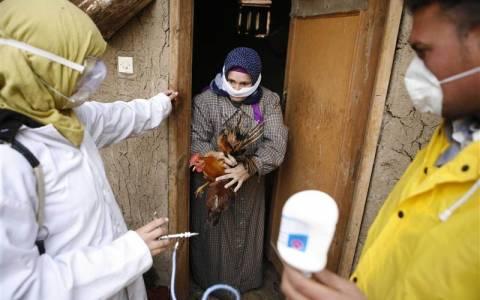 Αίγυπτος: Στους οχτώ οι νεκροί από τη γρίπη των Πτηνών