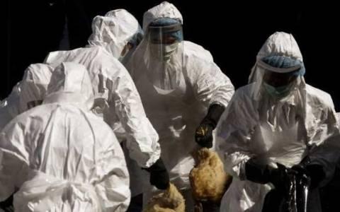 Αίγυπτος: Ακόμα ένας νεκρός από τη γρίπη των πτηνών