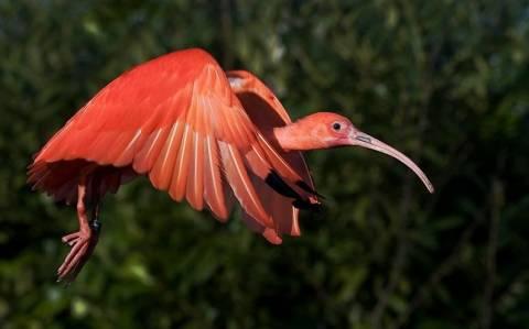 Σπάνια και πανέμορφα είδη πτηνών (photos)