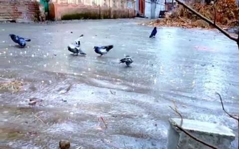 Τι γίνεται όταν τα περιστέρια περπατάνε στον πάγο;