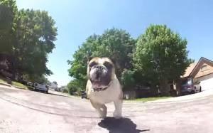Ο Thunder αγαπάει το τρέξιμο…
