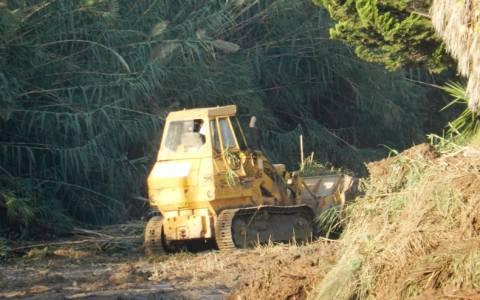 Ραφήνα: Σε κίνδυνο το οικοσύστημα στο «Μεγάλο Ρέμα»