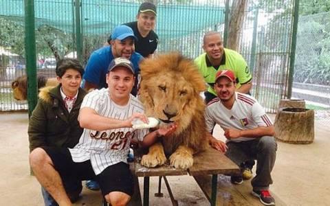 Αργεντινή: Επικίνδυνη μόδα επιτάσσει selfies με λιοντάρια!