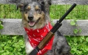 ΗΠΑ: Σκύλος… πυροβόλησε τον ιδιοκτήτη του!