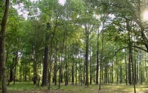 Νομοσχέδιο – «σκούπα» για τα δάση