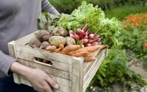 Κίνδυνοι και παρενέργειες από την κατανάλωση λαχανικών
