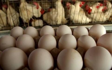 Ν. Κορέα: Αναστολή εισαγωγής πουλερικών από τις ΗΠΑ