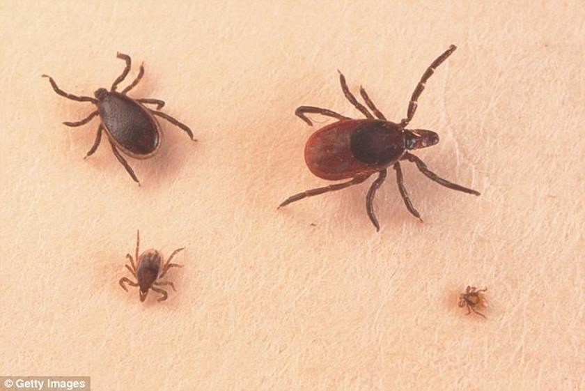 Η νέα θανατηφόρα ασθένεια που τρομοκρατεί τις ΗΠΑ!