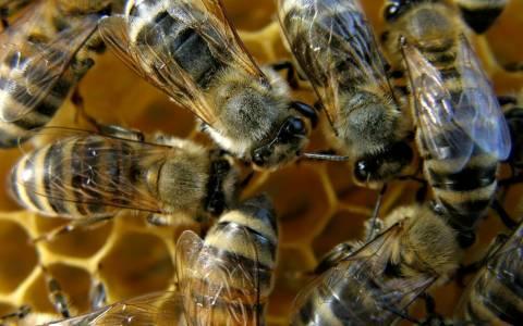 Σάμος: Διανομή μελισσοκομικών φυτών σε δικαιούχους