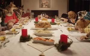 Σκύλοι και γάτες στο χριστουγεννιάτικο τραπέζι