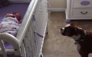Δείτε πώς αντιδρά σκύλος όταν ακούσει μωρό να κλαίει (vid)