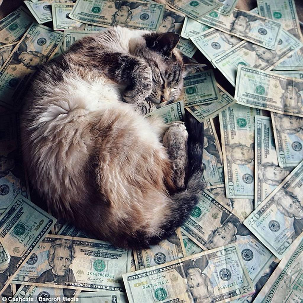 Πλούσιες γάτες ποζάρουν