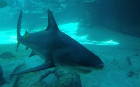 Αυστραλός τραυματίστηκε σοβαρά από καρχαρία που… ψάρεψε!