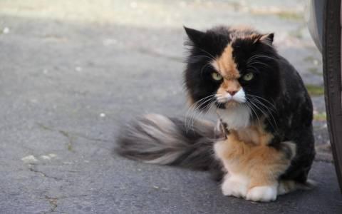 Η γάτα που αντιτίθεται, η γάτα που επιμένει (video)