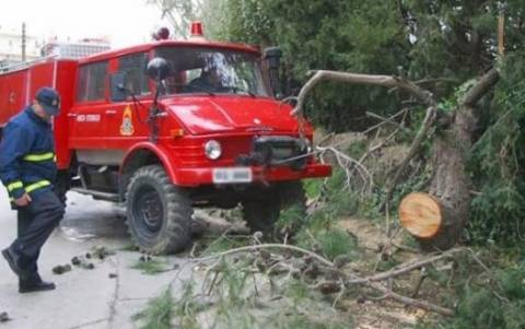 «Βροχή» τα τηλέφωνα στην Πυροσβεστική για πτώσεις δένδρων