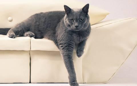 Ενας καναπές για τη γάτα σας