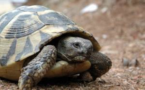 Μια χελώνα πάει για πικνίκ...