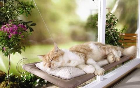 Το τέλειο κρεβάτι γάτας