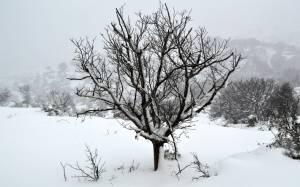 Καιρός: Νέα επέλαση του χιονιά – Θα χιονίσει στο κέντρο της Αθήνας