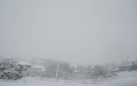 Eγκλωβισμένα αυτοκίνητα στον Ομαλό από τον χιονιά (Vid)