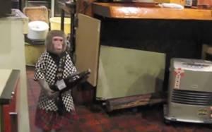 Μια μαϊμού ο καλύτερος σερβιτόρος (vid)