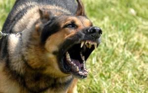 Ξάνθη: Ηλικιωμένος μεταφέρθηκε στο νοσοκομείο από επίθεση σκυλιών