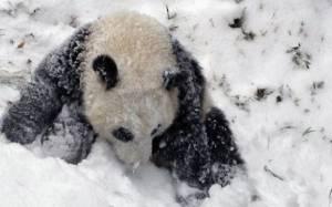 Μωρό πάντα παίζει με τα χιόνια για πρώτη φορά!
