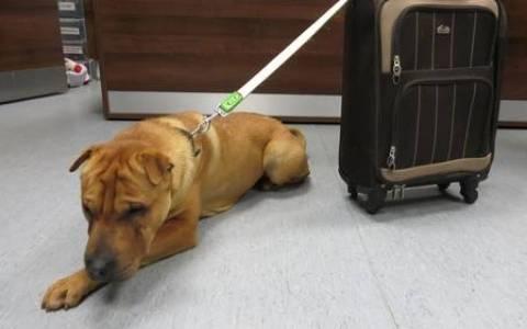 Αυτός (ένας σκύλος), αυτή (μια βαλίτσα) και τα μυστήρια...
