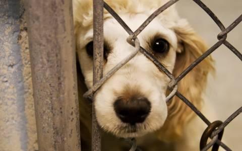 Σύλληψη αλλοδαπού για κακοποίηση ζώων στη Ρόδο