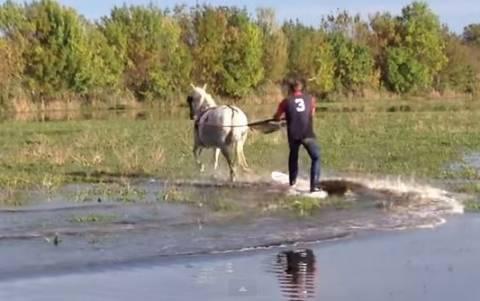 Σερφάροντας στη λίμνη με ένα… άλογο!