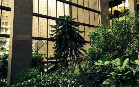 Η κρυμμένη ζούγκλα του Μανχάταν (Pics)