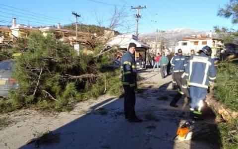 Δέντρο καταπλάκωσε δύο ταξί στα Ιωάννινα (Vid)