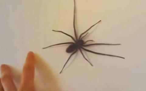 Ο λόγος που δεν πρέπει να αγγίζουμε αράχνες με το χέρι (vid)